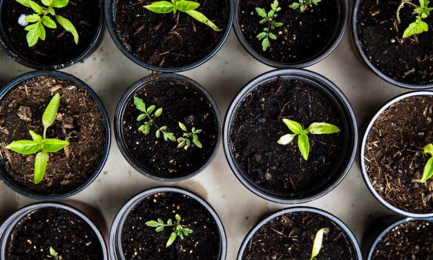 Six Steps to Spiritual Growth